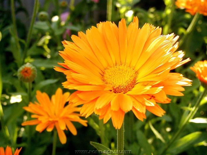 fleurs01